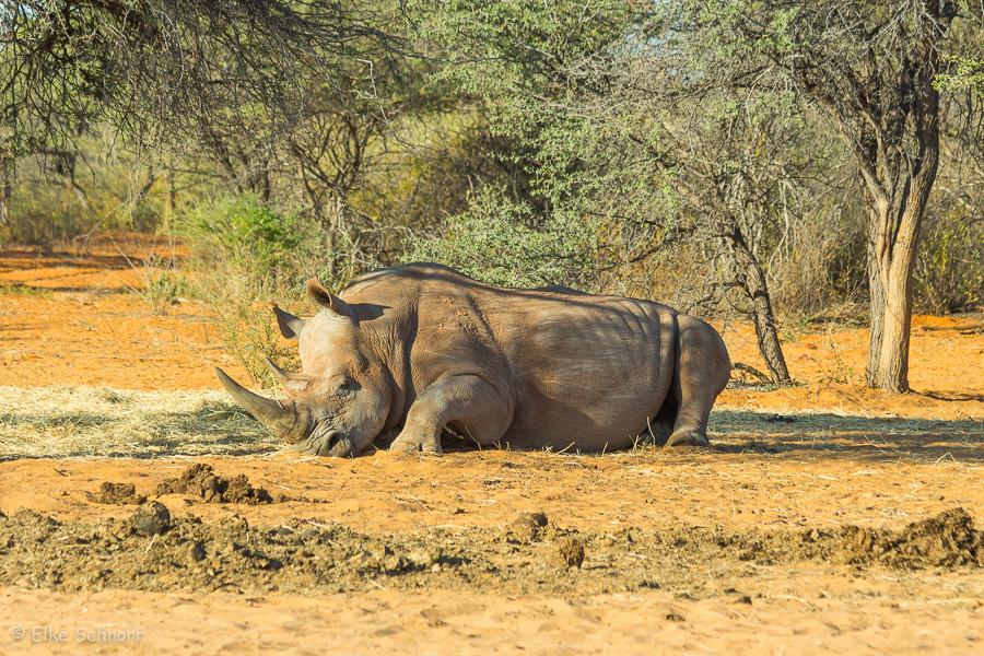 2019-Namibia-04-25.jpg