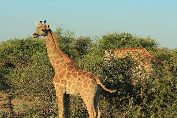 2019-Namibia-04-32.jpg