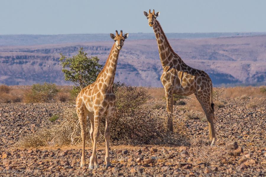 2019-Namibia-24-07.jpg