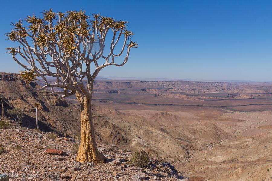 2019-Namibia-24-11.jpg