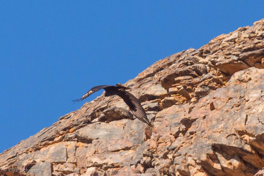 2019-Namibia-25-13.jpg