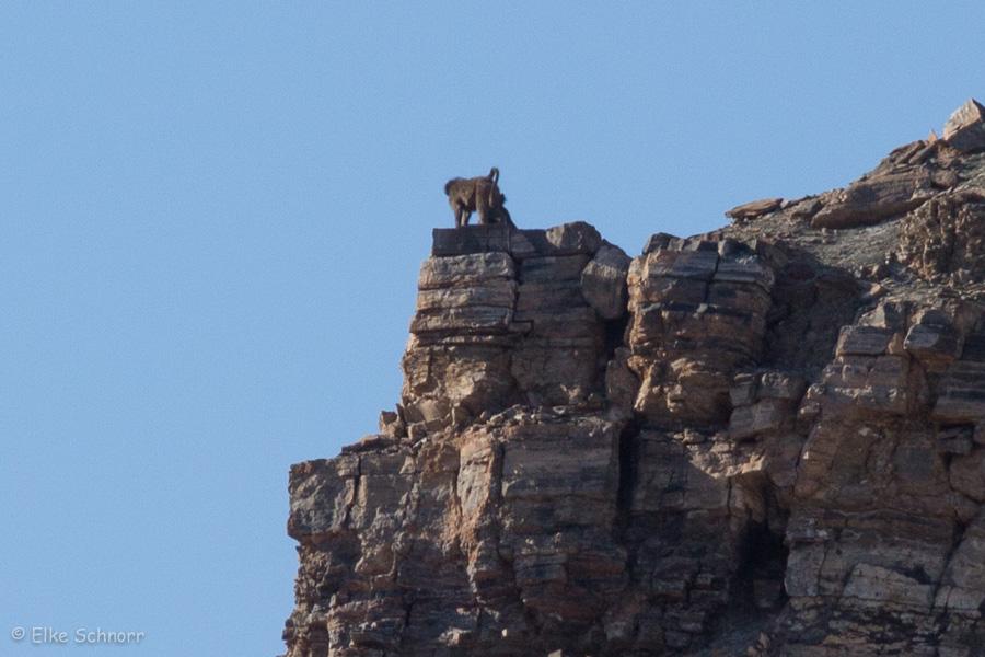 2019-Namibia-26-19.jpg