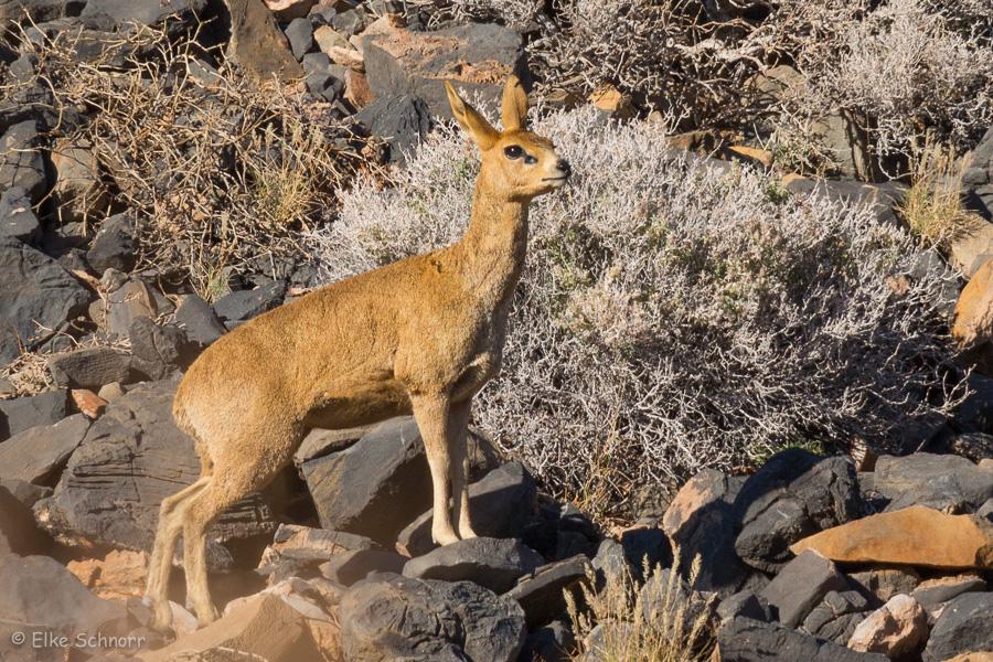 2019-Namibia-27-06.jpg