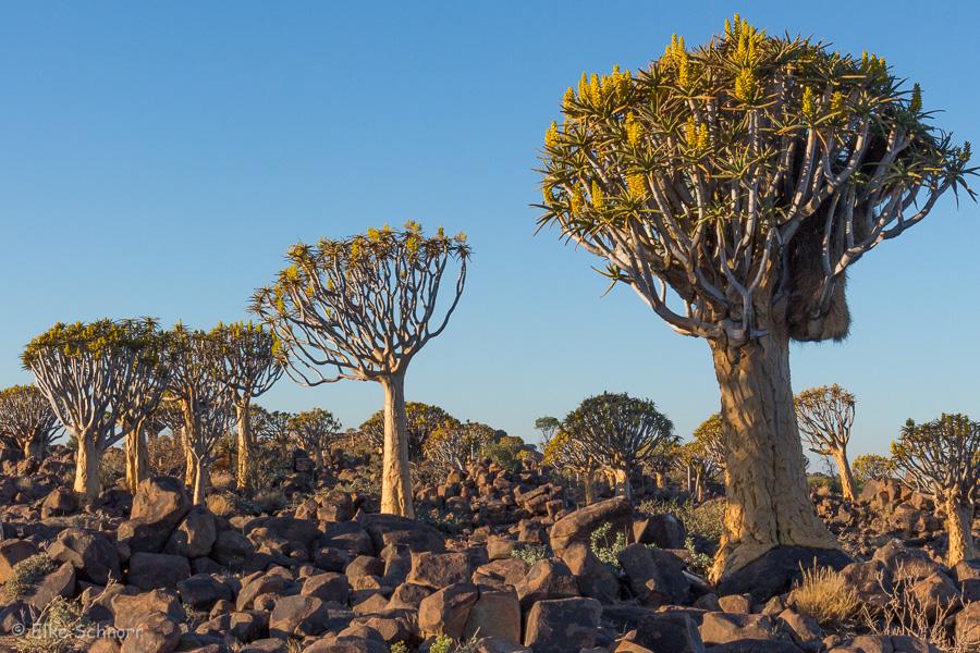 2019-Namibia-27-31.jpg