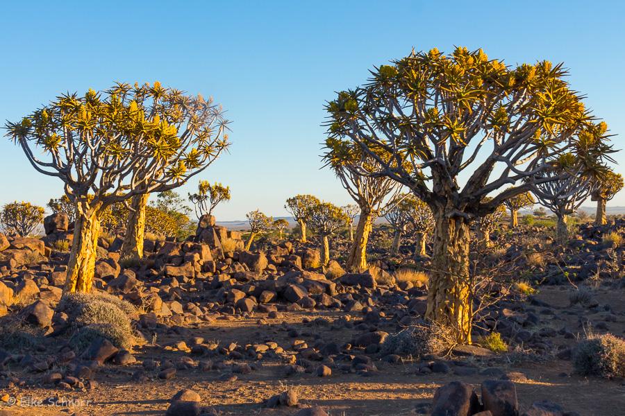 2019-Namibia-27-32.jpg