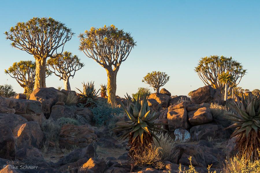 2019-Namibia-27-35.jpg