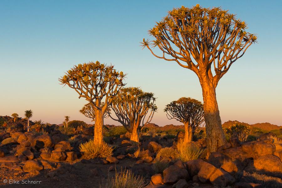 2019-Namibia-27-36.jpg