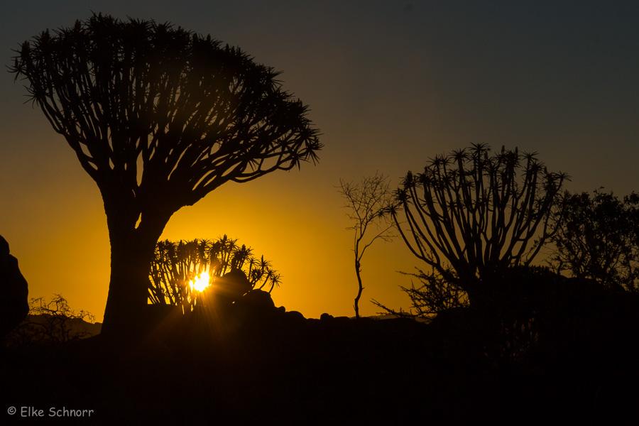 2019-Namibia-27-37.jpg