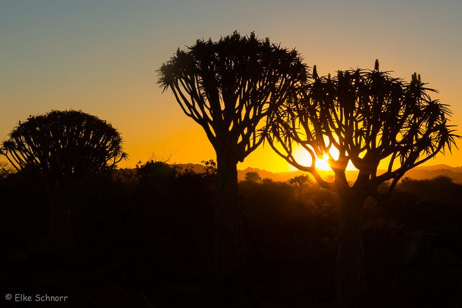 2019-Namibia-27-38.jpg