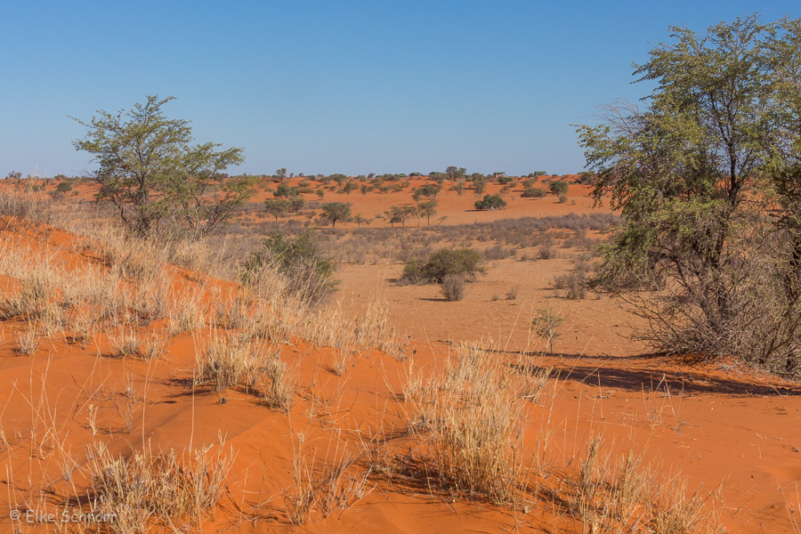 2019-Namibia-28-16.jpg