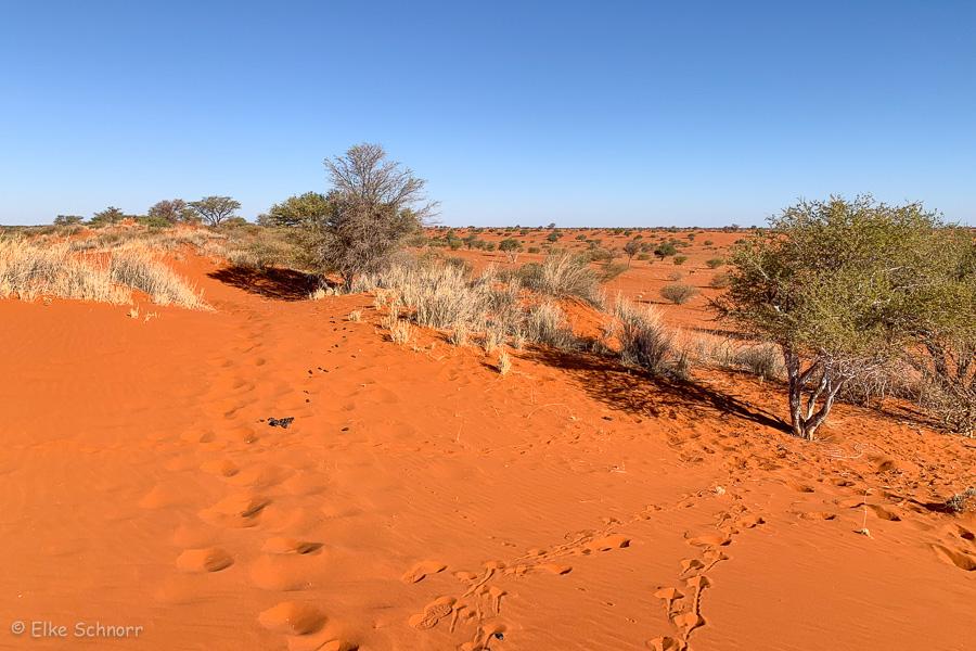 2019-Namibia-28-19.jpg