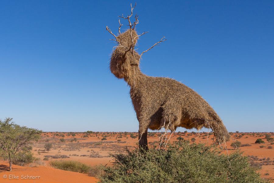 2019-Namibia-28-20.jpg