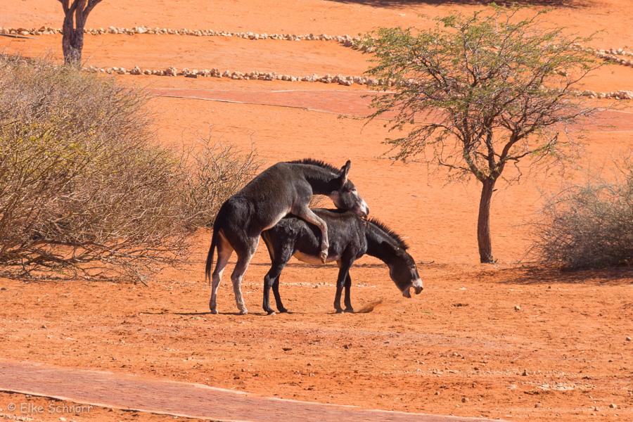 2019-Namibia-28-21.jpg