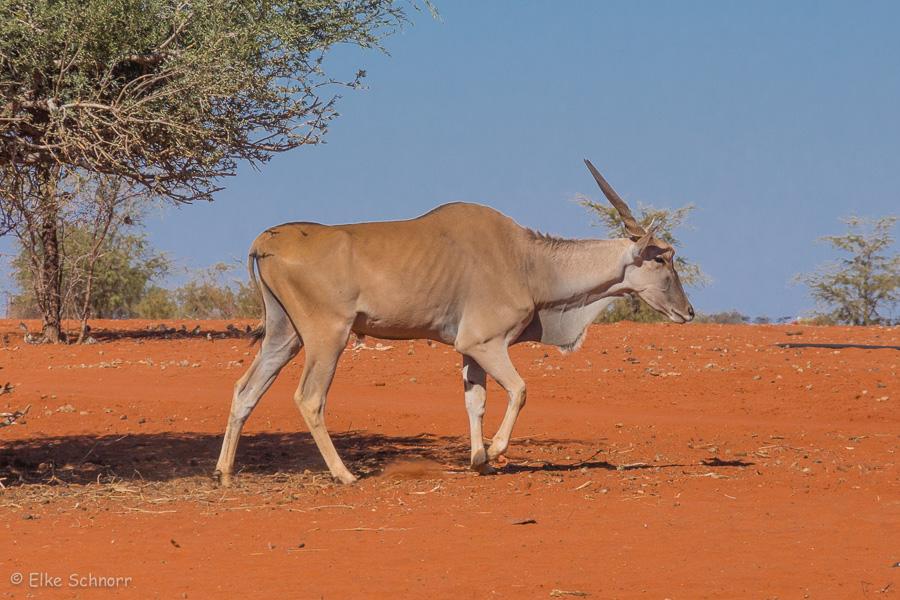 2019-Namibia-28-22.jpg