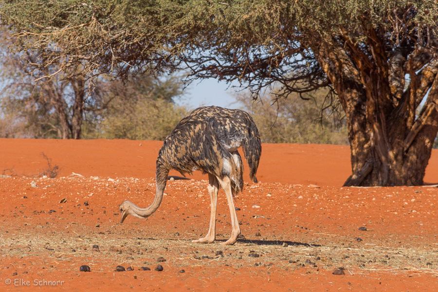 2019-Namibia-28-23.jpg