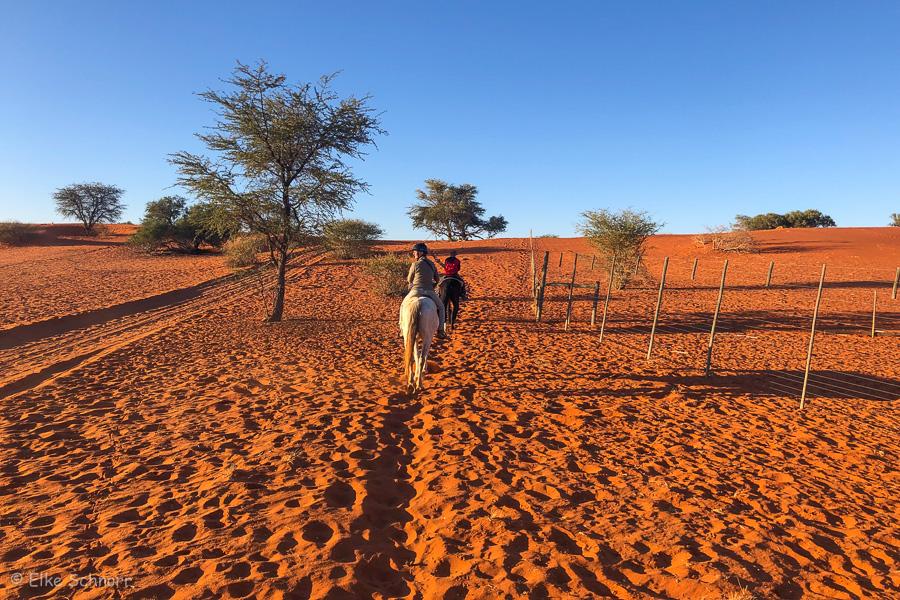 2019-Namibia-28-33.jpg