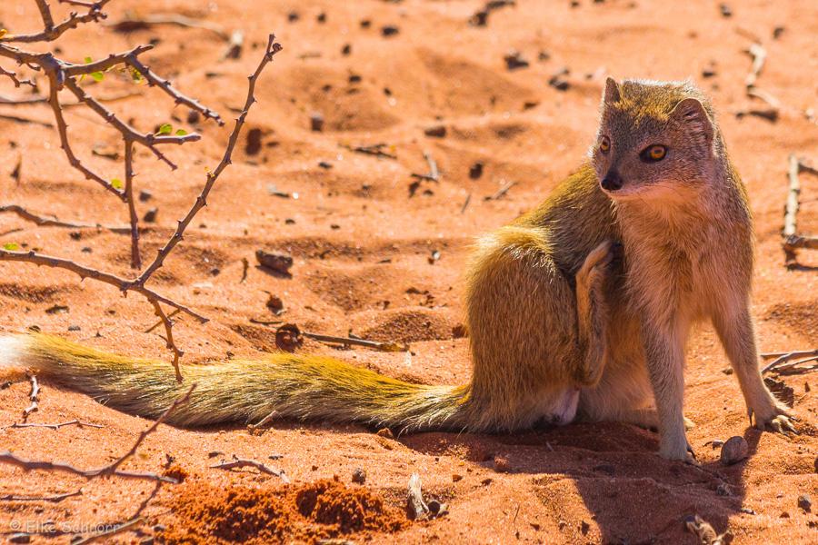 2019-Namibia-29-22.jpg