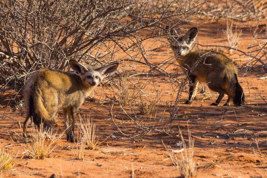 2019-Namibia-29-24.jpg