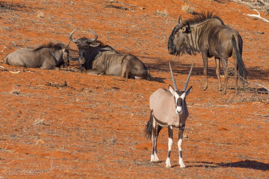 2019-Namibia-29-28.jpg