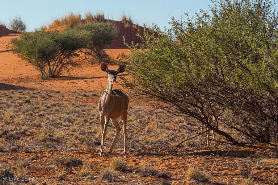 2019-Namibia-29-30.jpg