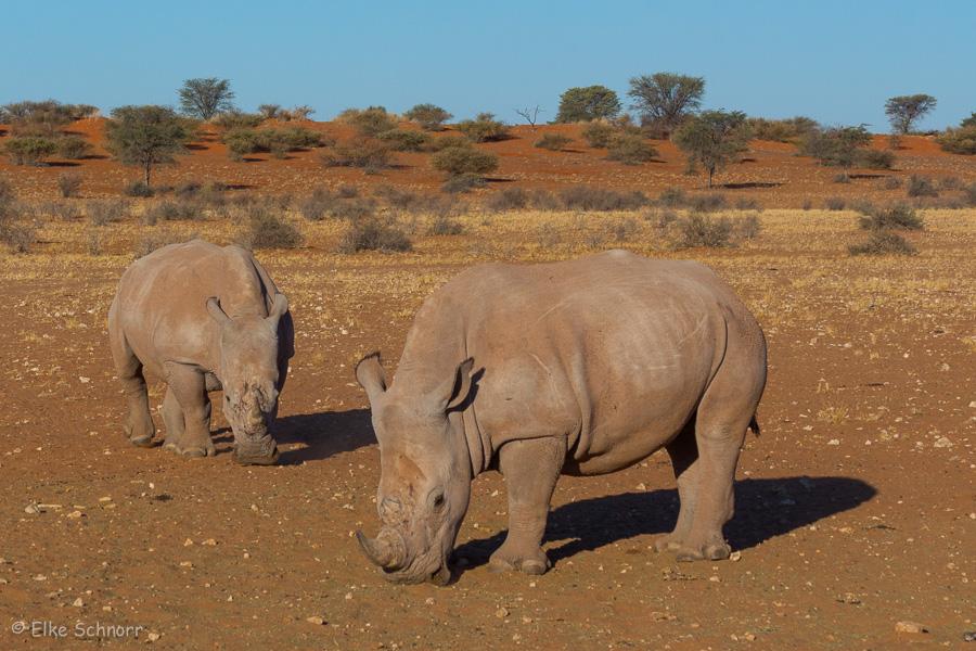 2019-Namibia-29-34.jpg