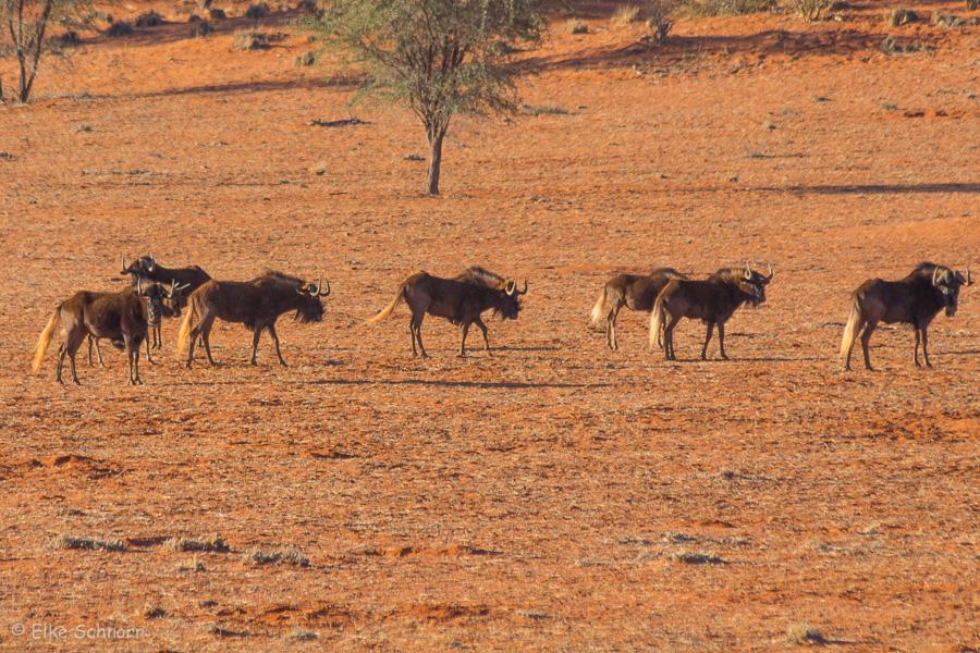 2019-Namibia-29-42.jpg