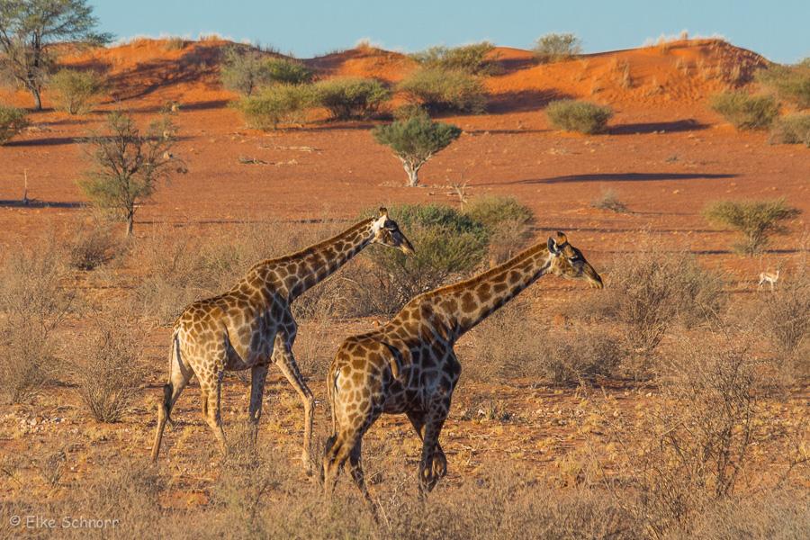 2019-Namibia-29-46.jpg