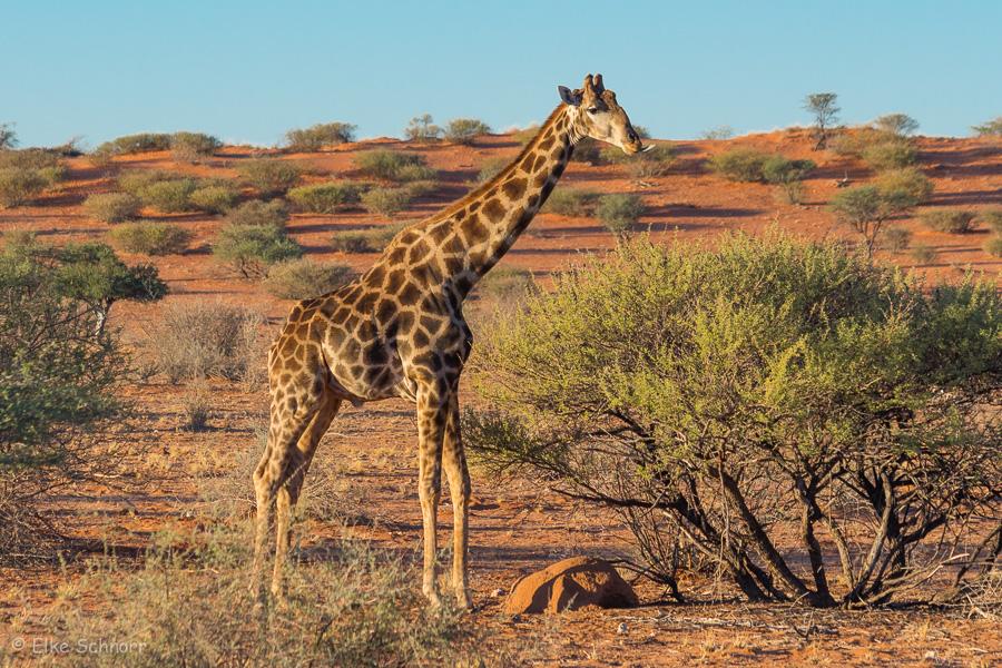 2019-Namibia-29-47.jpg