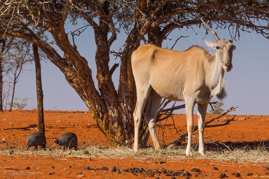2019-Namibia-30-04.jpg