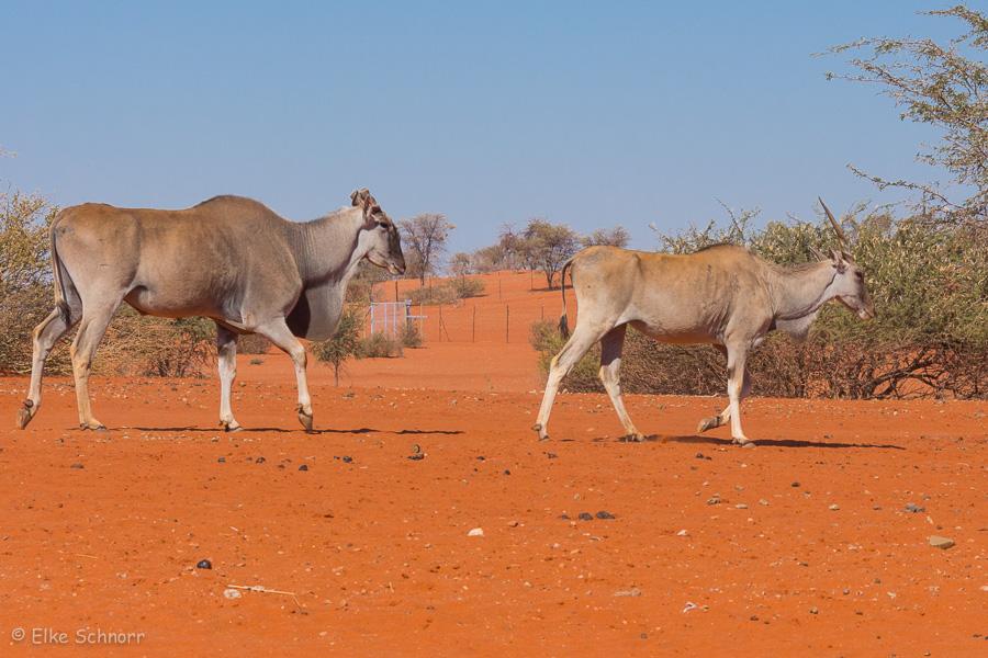 2019-Namibia-30-06.jpg