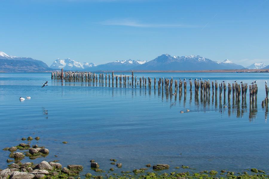 2020-Patagonien-29-22.jpg